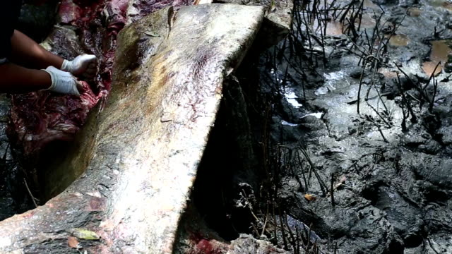 whale dead  at mangrove forest - poaching animal welfare stock videos & royalty-free footage