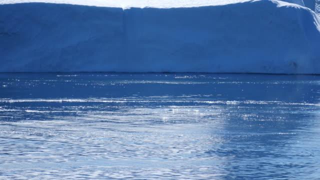 vídeos y material grabado en eventos de stock de ballena muy cerca de buceo - cetáceo