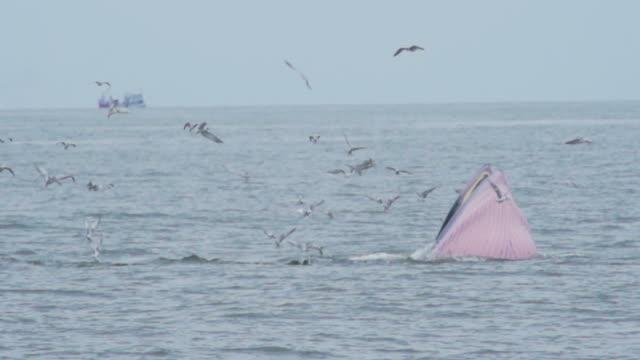 クジラ HD スローモーション: