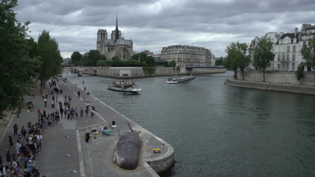 whale & notre dame - stranded stock videos and b-roll footage