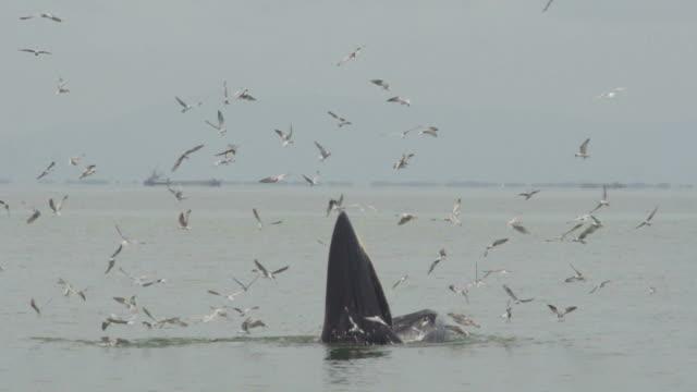 Whale Series (Super Slow Motion)