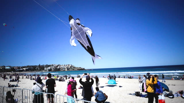 A whale shaped kite flys during the Festival of the Winds in Bondi on September 9 2018 in Sydney Australia Festival of the Winds is Australia's...