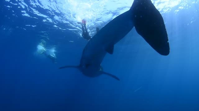 whale sharks. - bildkomposition und technik stock-videos und b-roll-filmmaterial
