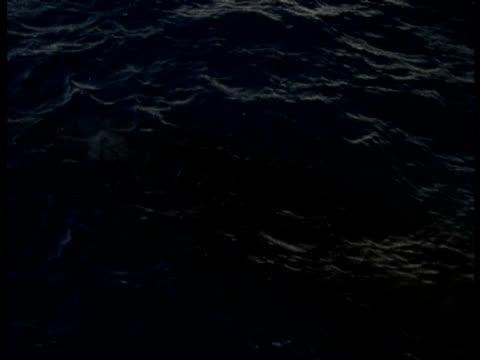vidéos et rushes de whale swims below surface of water then exhales, bubbles break surface of water, antarctica - remonter à la surface