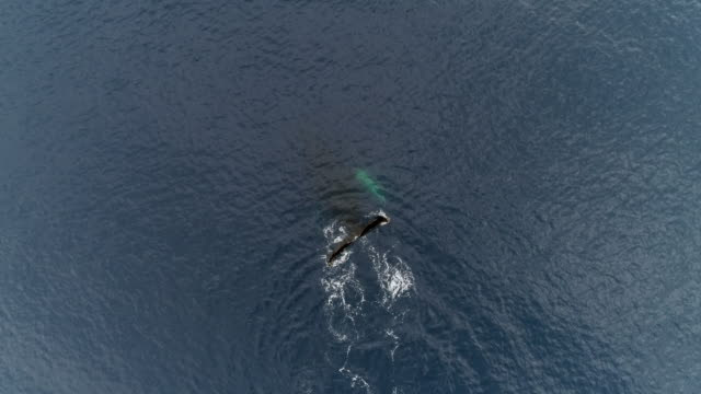 whale underwater - surfacing stock videos & royalty-free footage