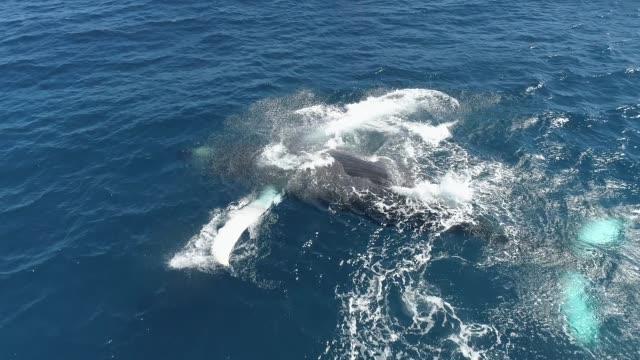 vidéos et rushes de baleine - baleine