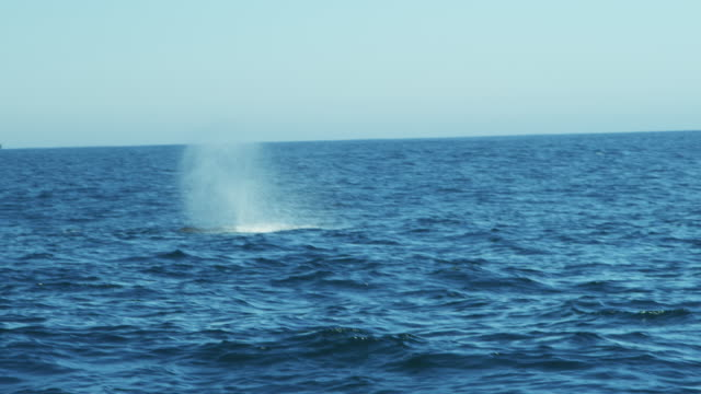 Whale watching blowhole ocean swimming Humpback whales California
