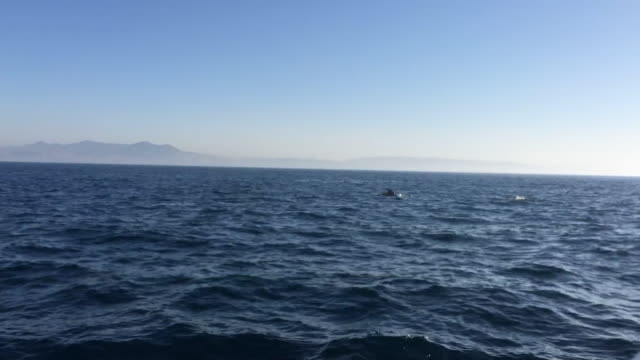 whale watching in the mediterranean sea - whale watching stock videos and b-roll footage