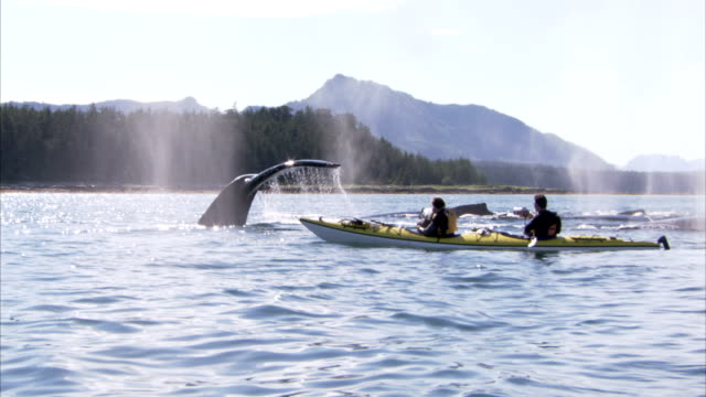 whales breach the ocean next to two men in a kayak. - aquatic mammal stock videos & royalty-free footage