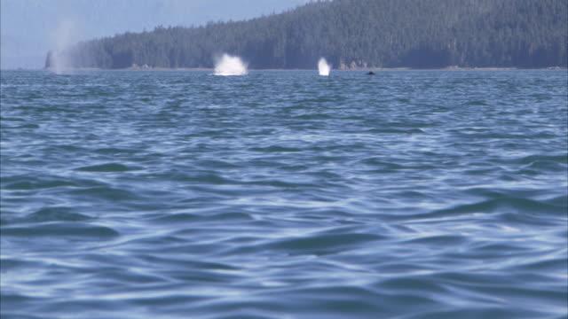 vídeos y material grabado en eventos de stock de whales breach the surface of the ocean as two kayakers paddle nearby. - cetáceo