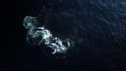 Whales feeding in the ocean