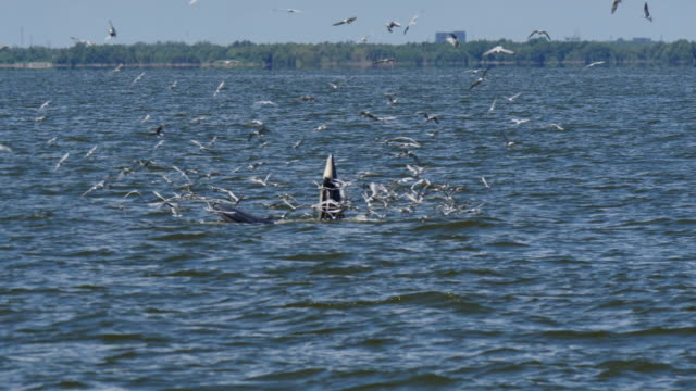 Whales feeding.