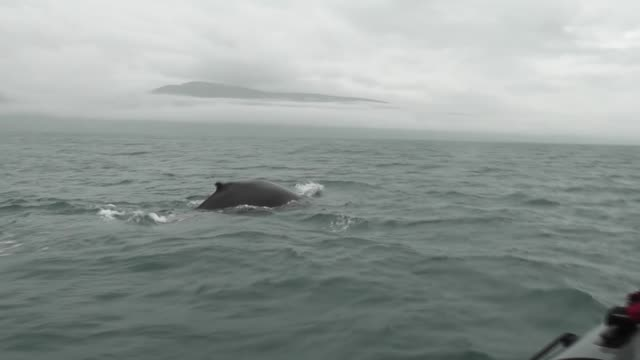 whales filmed from tourist whalewatching boat off iceland - 噴気孔点の映像素材/bロール