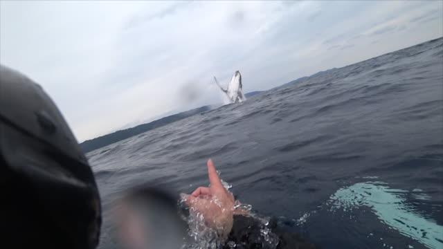 vídeos de stock e filmes b-roll de whales off the amami islands - cetacea