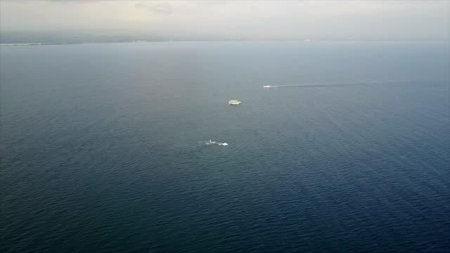 vídeos de stock, filmes e b-roll de as baleias espirrando na distância da costa da ilha de maui - baleia azul
