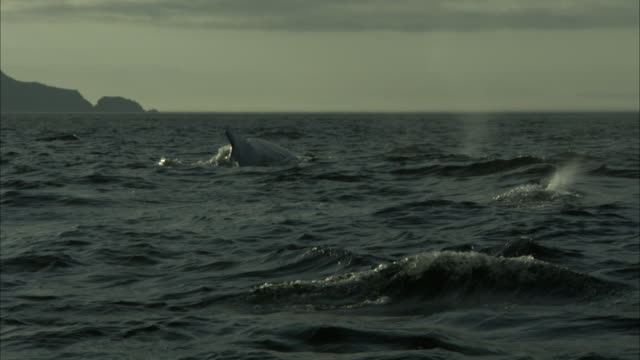 whales surface and spray in the choppy atlantic ocean off the coast of newfoundland. - cetacea video stock e b–roll