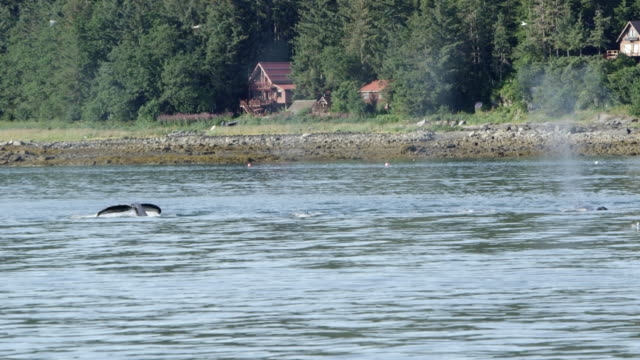 Whales swimming along the shore in Alaska