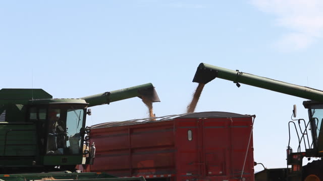 wheat being loaded into truck at harvest time - loading stock videos & royalty-free footage