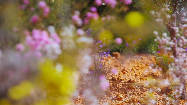 wheat belt western australia - wildblume stock-videos und b-roll-filmmaterial
