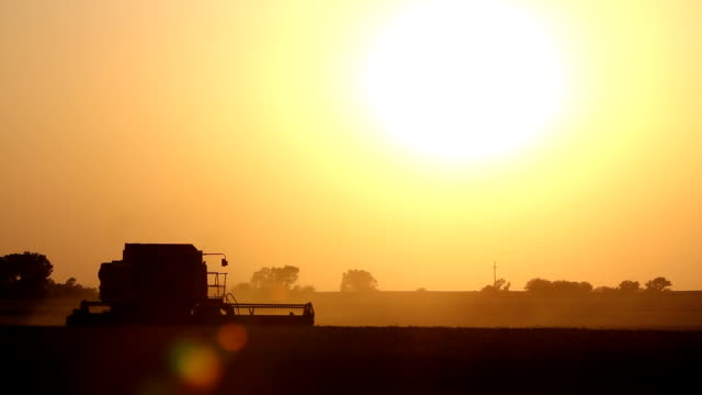 wheat combine harvesting - great plains stock videos & royalty-free footage