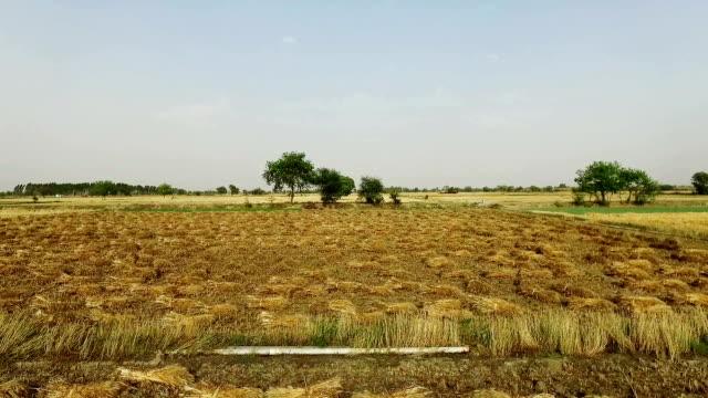 vídeos y material grabado en eventos de stock de paquete de cultivo de trigo en el campo elevado ver - haz de luz