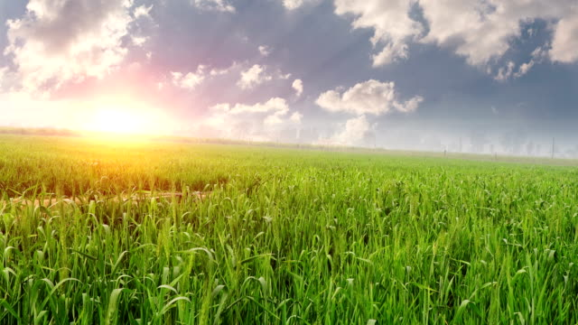 wheat crop field landscape - pasture stock videos & royalty-free footage