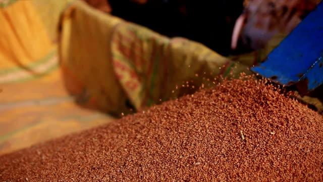 stockvideo's en b-roll-footage met tarwe oogst oogsten - volkoren