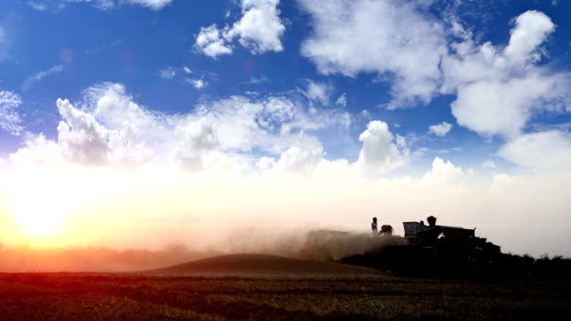 wheat crop harvesting - dramatic sky stock videos & royalty-free footage