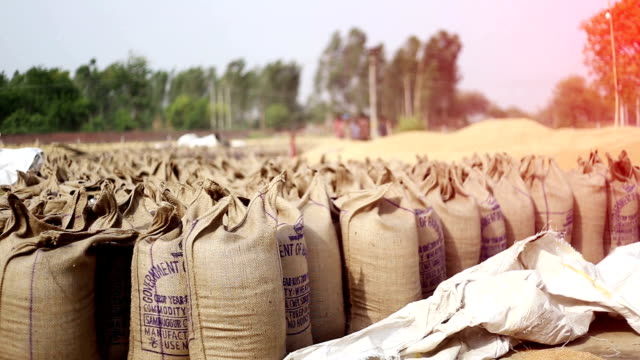 wheat crop heap open in the market - sacca video stock e b–roll