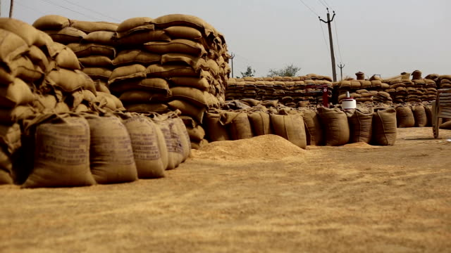 wheat crop heap open in the market - india stock videos & royalty-free footage