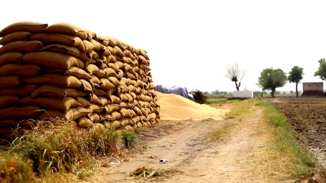 wheat crop heap open in the market - sack stock videos & royalty-free footage