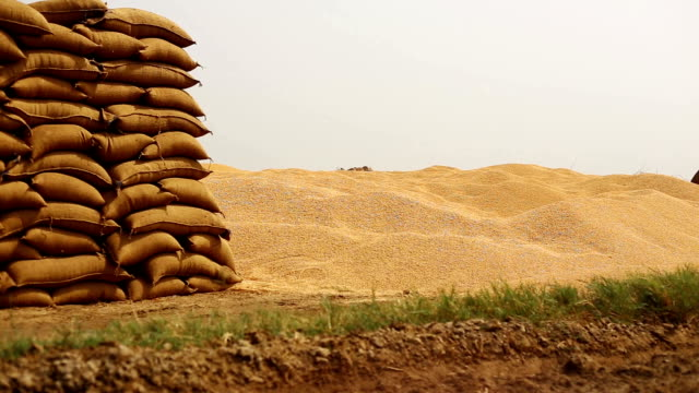 wheat crop heap open in the market - cereal plant stock videos & royalty-free footage