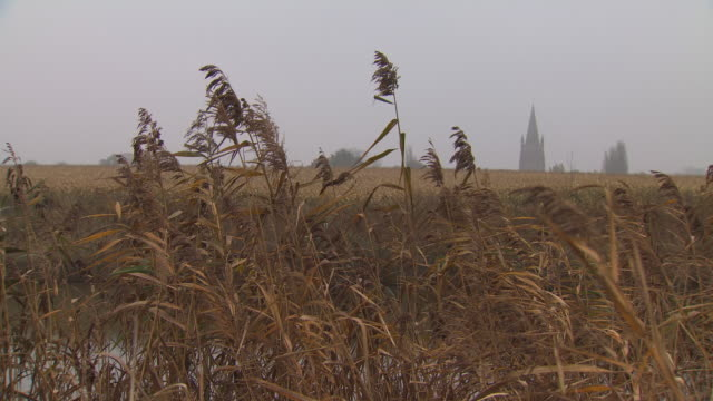 vidéos et rushes de wheat crops wave in a breeze near the steeple of a church in an area heavily affected by wwi, northern france. - élevé