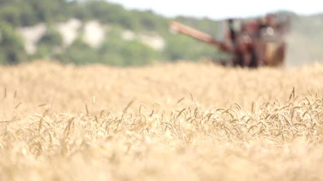 stockvideo's en b-roll-footage met wheat ears and harvester in the background - volkorentarwe