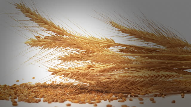 hd slow-motion: wheat ears with seeds - vignette stock videos & royalty-free footage