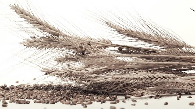 stockvideo's en b-roll-footage met hd slow-motion: wheat ears with seeds - volkorentarwe