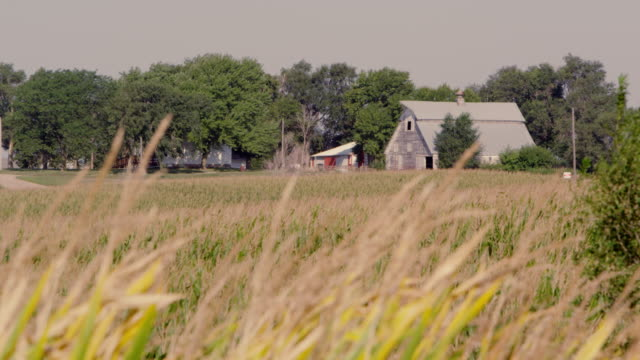 wheat farm - nebraska stock-videos und b-roll-filmmaterial