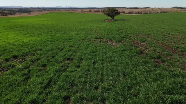 wheat farming in gunnedah, new south wales, australia on saturday, may 30, 2020. - land stock videos & royalty-free footage