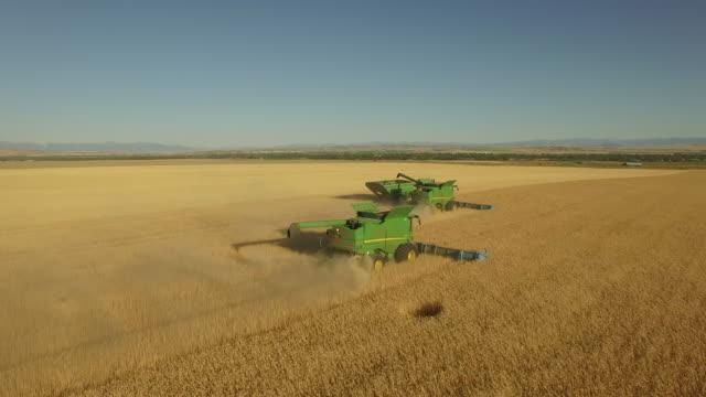 wheat field 01 - fame video stock e b–roll