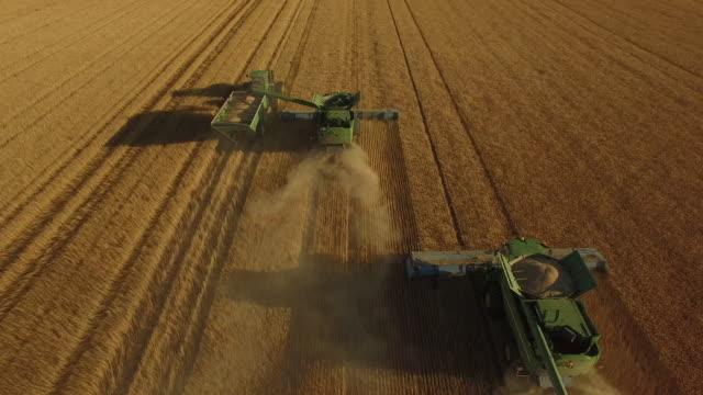 wheat field 03 - fame video stock e b–roll