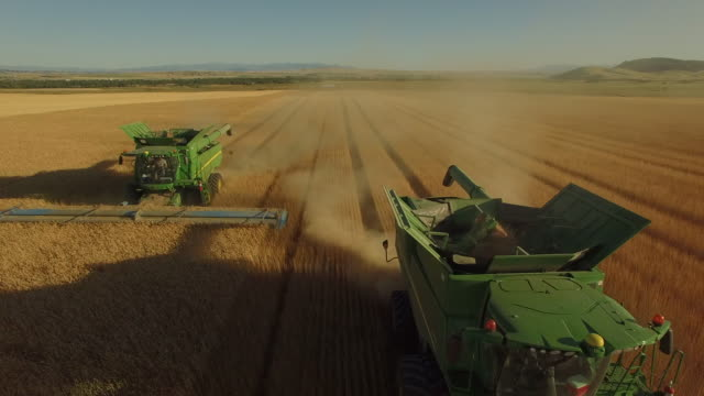 wheat field 05 - combine harvester stock videos and b-roll footage