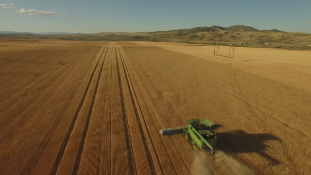 wheat field 06 - harvesting stock videos and b-roll footage