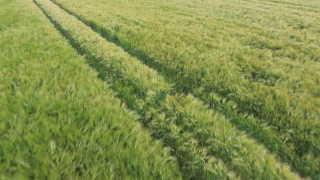 Wheat Field Clip 1