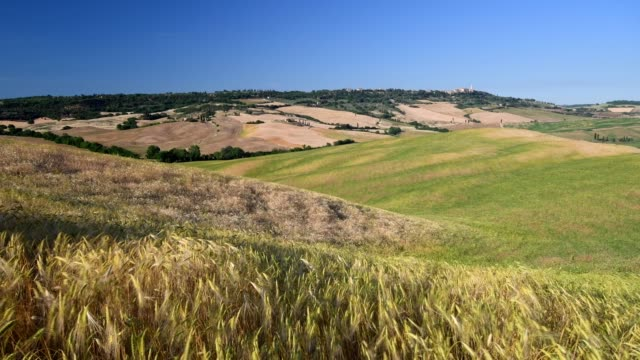 wheat field in summer, pienza, val d'orcia, siena province, tuscany, italy - anhöhe stock-videos und b-roll-filmmaterial