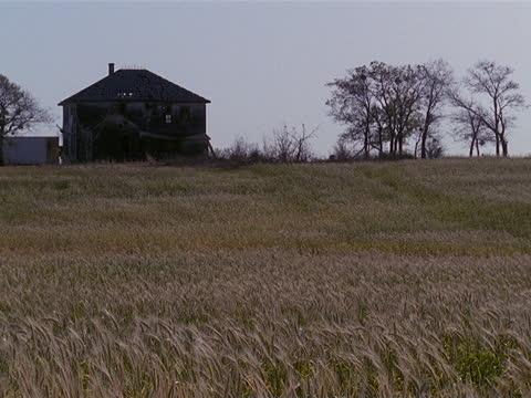 vidéos et rushes de a wheat field stands in front of a large rundown farmhouse. - ferme aménagement de l'espace