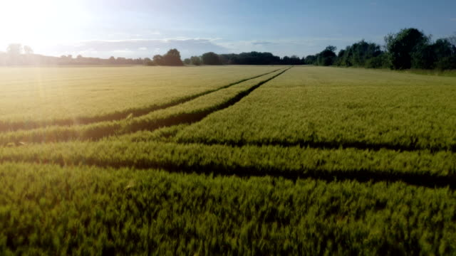wheat field - ノルトラインヴェストファーレン州点の映像素材/bロール