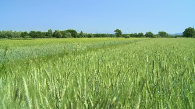 ws pov wheat field / vrhnika, slovenia - vrhnika stock videos & royalty-free footage