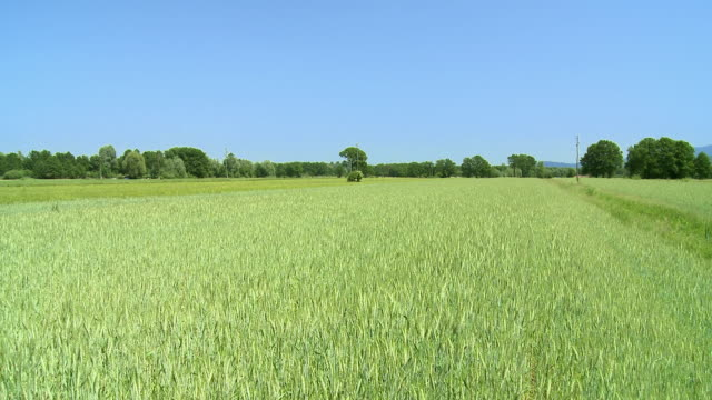 ws pov wheat field / vrhnika, slovenia - vrhnika stock videos & royalty-free footage