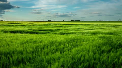 小麦のフィールド風 - grass点の映像素材/bロール