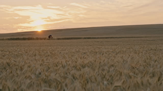 slo mo wheat field with a cyclist silhouette riding a bike at sunset - prekmurje stock videos & royalty-free footage
